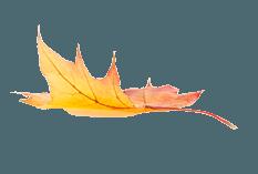 Woodway Medizinische Laufbänder 3